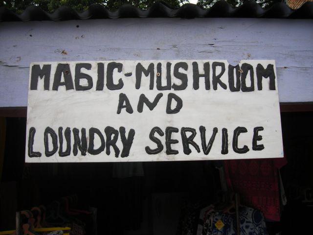 pilz und waschservice